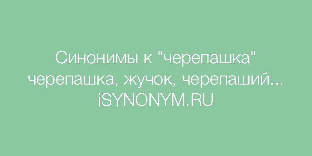 Синонимы слова черепашка